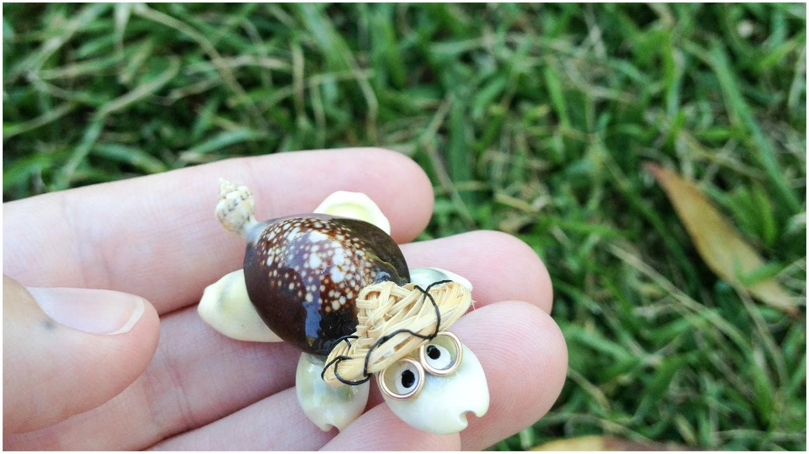 turtle, shells, shell turtle