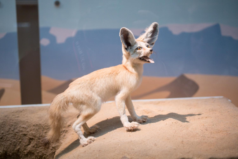 Washington National History Museum Rocks Animal