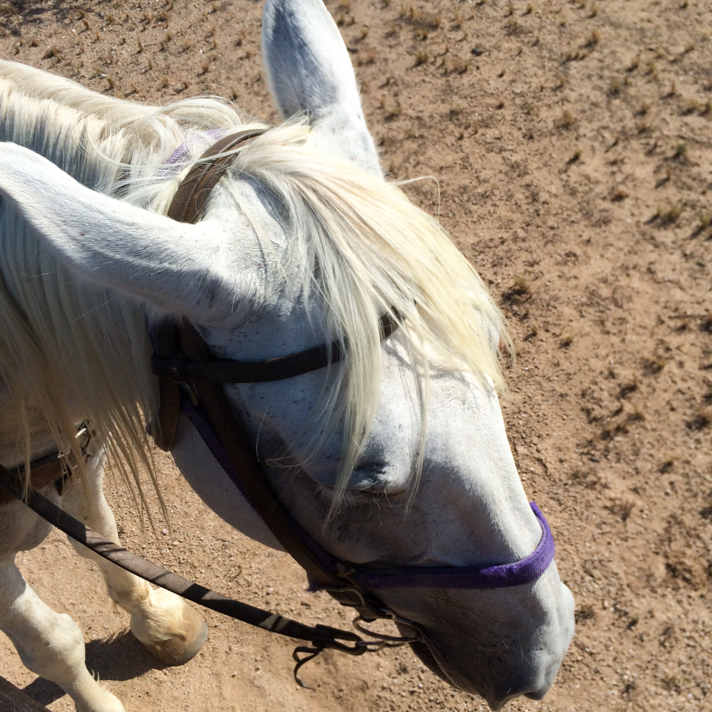 Cave Creek Outfitters Horse Back Riding Review