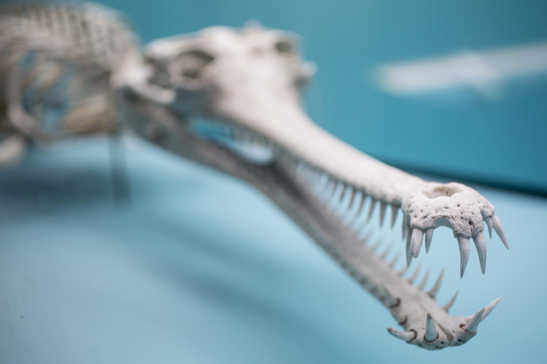 Washington National History Museum Bones