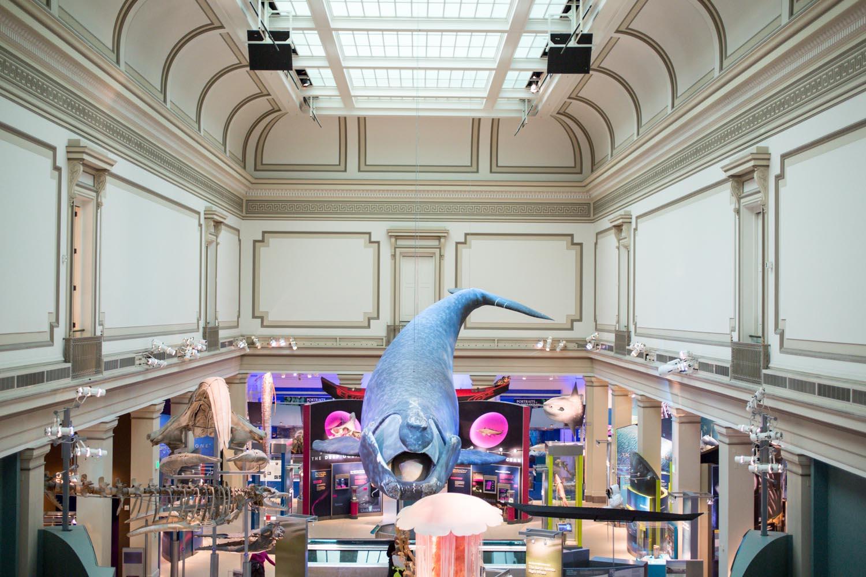Washington National History Museum Ocean Room